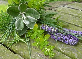 Fresh herbs from the gardens at The Old Vicarage